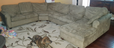 couch / sofa in Glendale Heights, Illinois