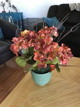 Reduced: Fall Colored Flowers in Joliet, Illinois