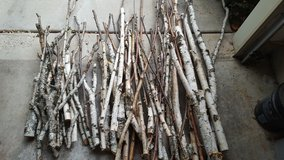 Birch Branches for any season in Bartlett, Illinois