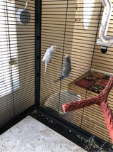Two Parakeets & Critter Nation Habitat in Yucca Valley, California