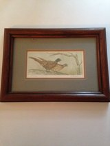 Pheasant Picture and Duck Picture in Glendale Heights, Illinois