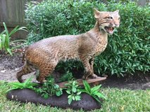 Bobcat taxidermy in Kingwood, Texas