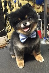 Dog grooming in Belleville, Illinois