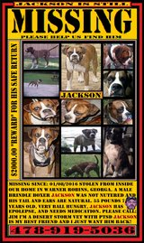 Jackson was stolen from inside our home January 8th of last year, haven't given up hope of findi... in Macon, Georgia