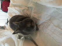 Bunny to good home in San Clemente, California