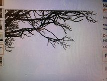 Large Tree Wall Decal Sticker - Semi-Gloss Black Tree Branches, 44in Tall X 100in Wide, Left To ... in Stuttgart, GE