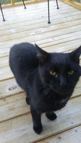 Great Cat in Fort Campbell, Kentucky