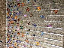Butterfly shower curtain in Fort Campbell, Kentucky