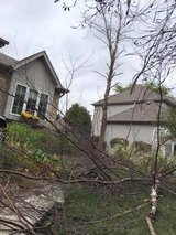 Small to Medium Size Tree Removal in Oswego, Illinois