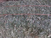 Alfalfa hay with more grass than usual in this cutting. Great winter feed. in Alamogordo, New Mexico