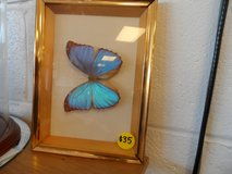 FRAMED BUTTERFLY (TAXIDERMY) in Cherry Point, North Carolina