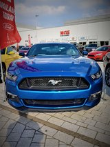 MUSTANG CLEARANCE SALE in Ramstein, Germany