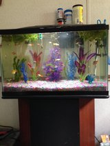 30 gallon aquarium with stand in Cherry Point, North Carolina