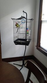 2 Parakeets and large hanging cage in Ottawa, Illinois