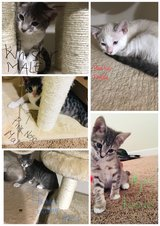 kittens free to a good home in Camp Lejeune, North Carolina