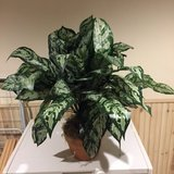 Artificial Plant in Great Lakes, Illinois
