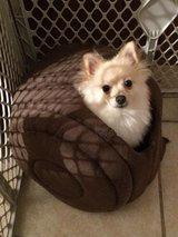 pomeranian dog in Warner Robins, Georgia