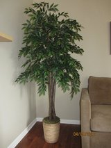 Nearly Natural Silk Ficus Tree (6 foot) in Algonquin, Illinois