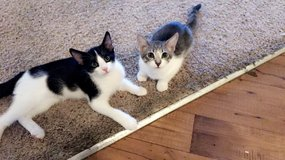 Kittens need new home in Temecula, California