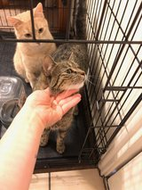 Cats looking for a new home in Fort Hood, Texas