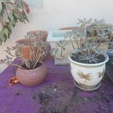 Plants in pots. in Yucca Valley, California