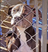 I been Looking furever for a home!?! in Riverside, California