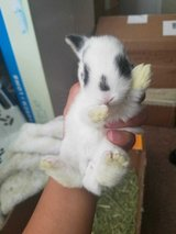 Baby bunny in Nellis AFB, Nevada