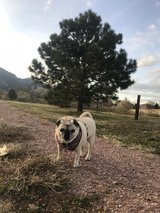 Pet Sitter Wanted in Colorado Springs, Colorado