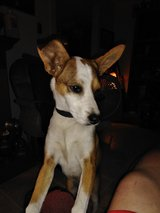 LOST FEMALE DOG in DeRidder, Louisiana