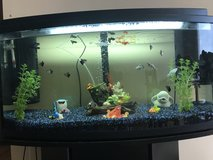 Fish tank and accessories in Baumholder, GE