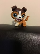 NEW Littlest Pet Shop Collie-Retired #237 in Camp Lejeune, North Carolina