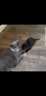 FREE Kitten and Cat in Colorado Springs, Colorado