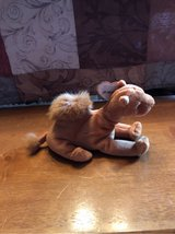 camel Beanie BABY in Ramstein, Germany