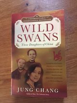 Wild Swans in Vicenza, Italy