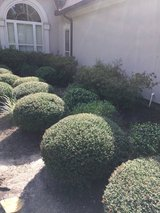 Lawn, Mulch, Tree Services, and Christmas Lights Installation in Conroe, Texas