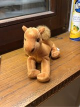 Camel Beany Baby - Nike's in Ramstein, Germany