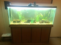 55 Gallon Aquarium with cabinet stand in Coldspring, Texas