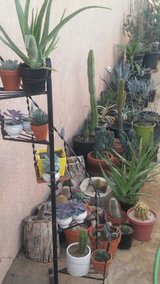 Desert tree's , all kind of Cactus , Ocotillo / firewood for sale . in 29 Palms, California