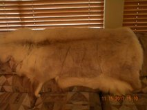 Artic Reindeer Fur/Hide in Kingwood, Texas