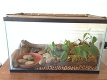 Frog Terrarium w/live plants + addl supplies in Gordon, Georgia