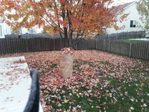 leaf clean-up. in New Lenox, Illinois