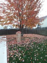 leaf clean-up in New Lenox, Illinois