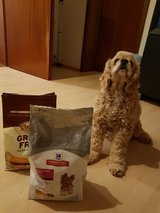 Dog Food (Opened) in Ramstein, Germany
