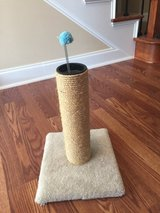 Cat Scratching Post in Warner Robins, Georgia