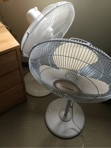 pair of fans in Okinawa, Japan