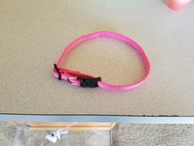 Xs dog collar in Manhattan, Kansas