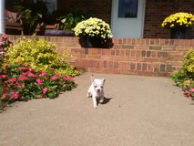 Tiny puppy in Todd County, Kentucky
