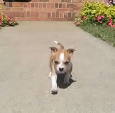 Puppy in Todd County, Kentucky