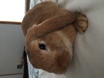 Holland Lop and cage in Fort Campbell, Kentucky