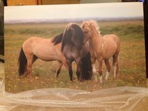 Canvas Print Horses 48x31 in Fort Knox, Kentucky